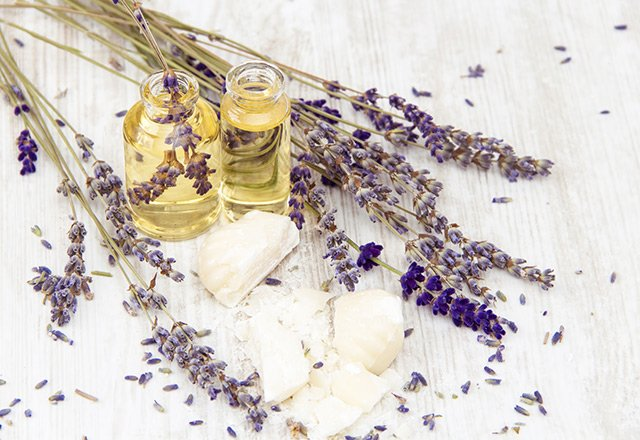 The healing benefits of lavender